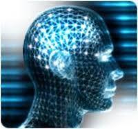 Estrogeni, toccasana per l'intelligenza