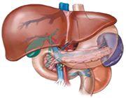 fegato creato in laboratorio