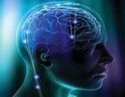 cervello memoria visiva