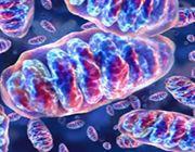 diabete mitocondri prevenire