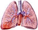 La tbc aumenta il rischio di tumore ai polmoni
