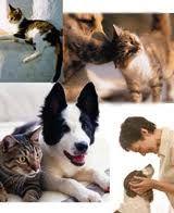 Cani e gatti, boom omeopatia