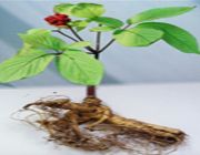 ginseng salute mentale