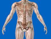 osteoporosi ossa pomata