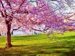 La primavera e iproblemi di equilibrio psicofisico
