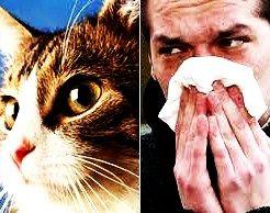 L'allergia ai gatti si cura con un'iniezione