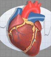 Cuore, il lavoro e il rischio infarto