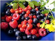 frutti di bosco proprieta salutari