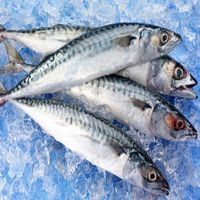 importanza pesce tavola