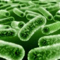 micosi infezioni periodo estivo