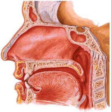 deviazione setto nasale salute