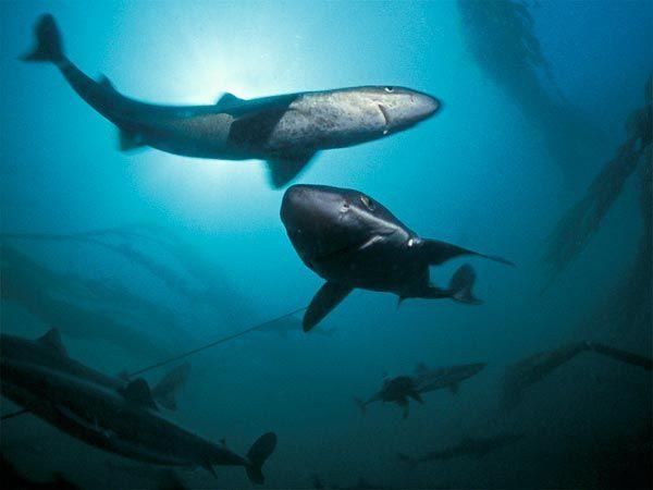 virus rimedio squali