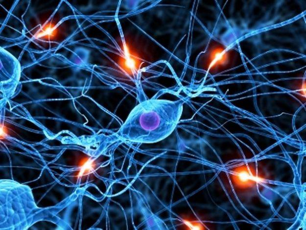 neuroni ricordi