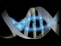 Nuovi fattori di sviluppo del genoma