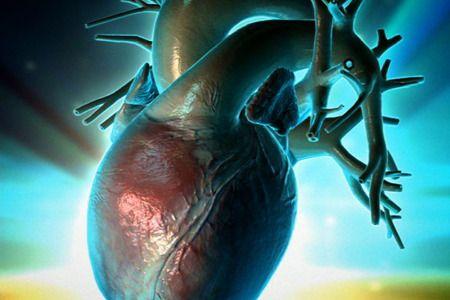 cellule staminali cuore