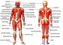 Gene ripara muscoli