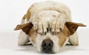 Botti di capodanno mettono a rischio gli animali