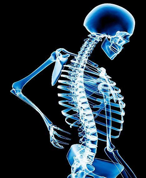 Skeleton to illustrate back pain story.fml M382448 Back_pain SPL.jpg