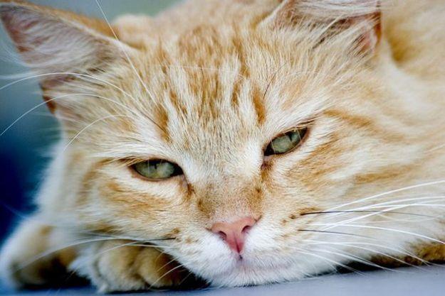 pet therapy gatti ospedale