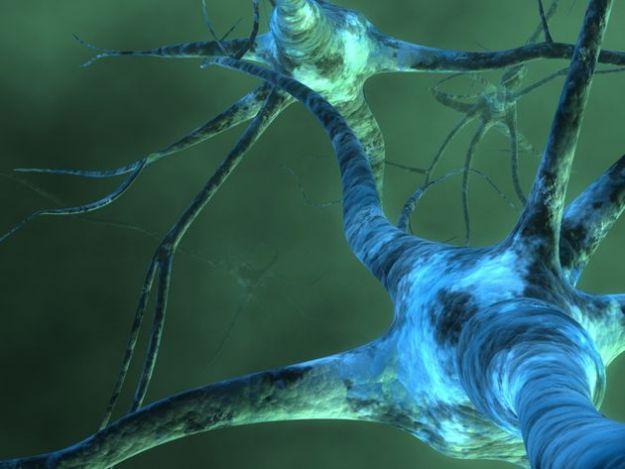 cervello valori circuito neuronale