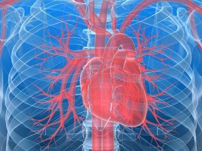 cuore proteggerlo effetti collaterali oncologiche
