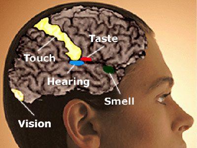 cervello persone capacita sensoriali