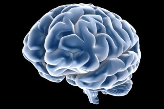 obesita disfunzioni cerebrali