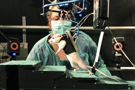 tornare a camminare dopo la paralisi intervento ha funzionato laboratorio