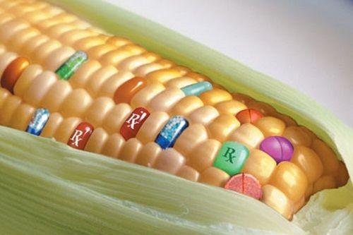 OGM pro e contro