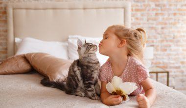 Bimba che dà un bacio a un gattino