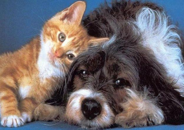 come difendere cane gatto pulci zecche