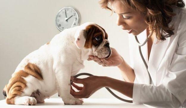 tosse nei cani cause cura rimedi cosa fare