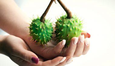 Mani e piante grasse