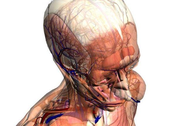 quiz corpo umano