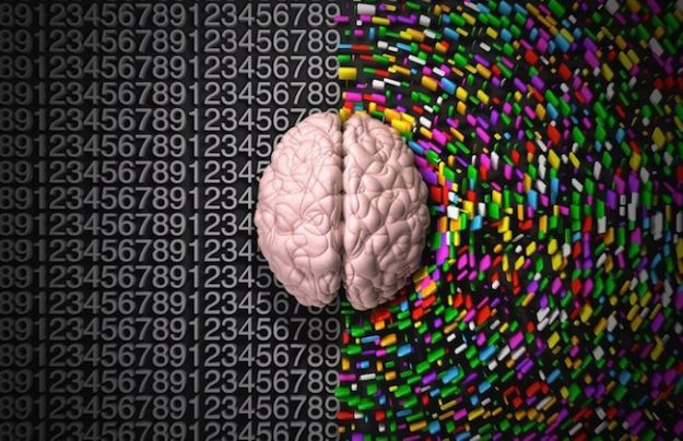 quale emisfero del cervello sei test
