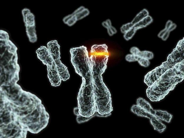 Cromosomi telomeri