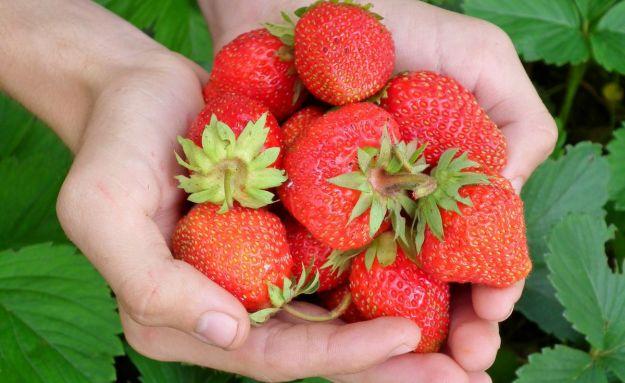 frutta e verdura rossa perche fa bene proprieta benefici