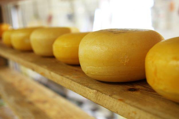 formaggi senza caglio animale quali sono consigli per vegetariani