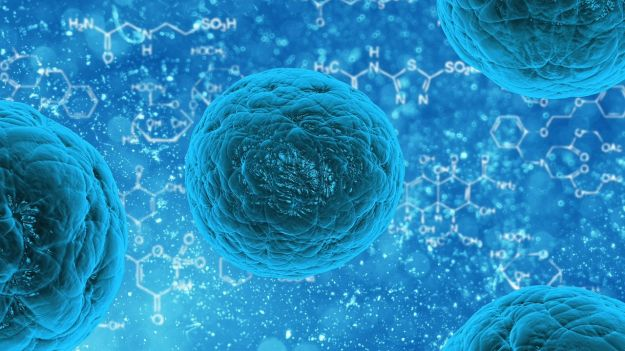 cellule staminali cordone ombelicale