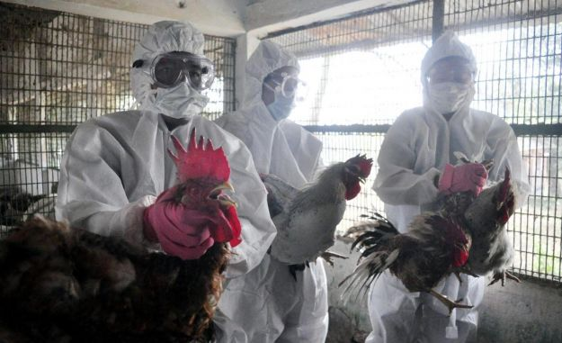 aviaria sintomi contagio cura