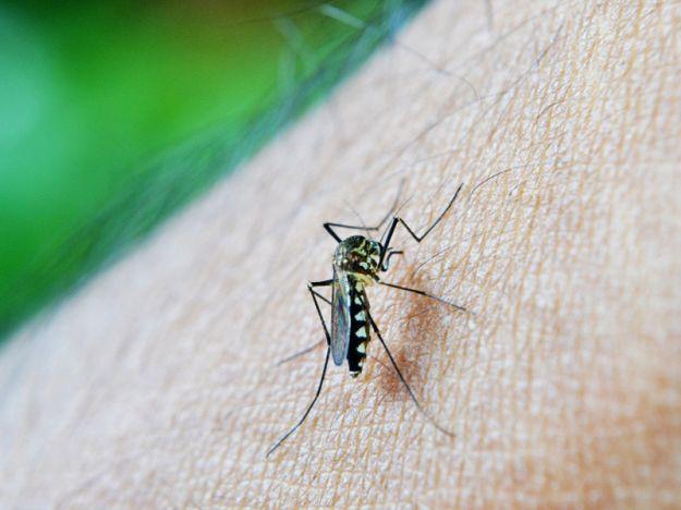 Zanzara dengue