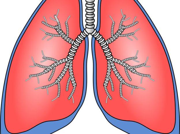Polmoni respiro