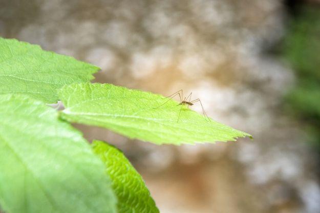 alimenti che allontanano le zanzare