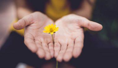 Mani con un fiore giallo