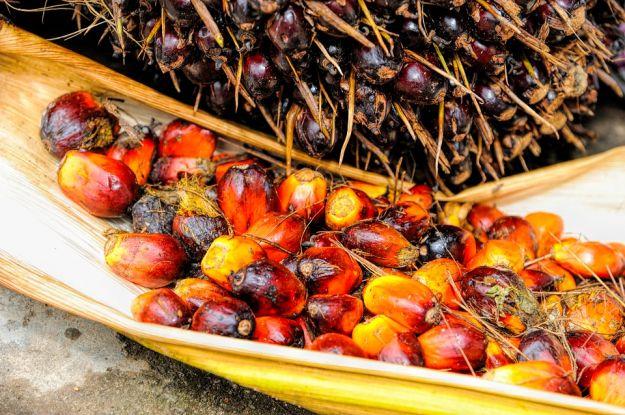 olio di palma alimenti