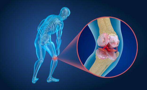 cartilagini legamenti
