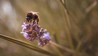ape fiore studio