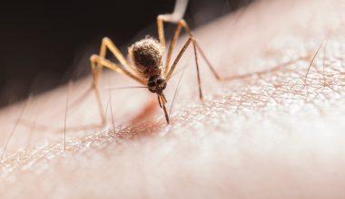 come prevenire punture zanzara