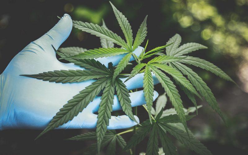 Cannabis: il consumo raddoppia rischi cardiocircolatori